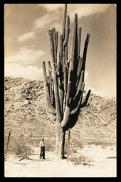 The World's Largest Saguaro Cactus