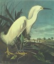 Birds of America / Audubon