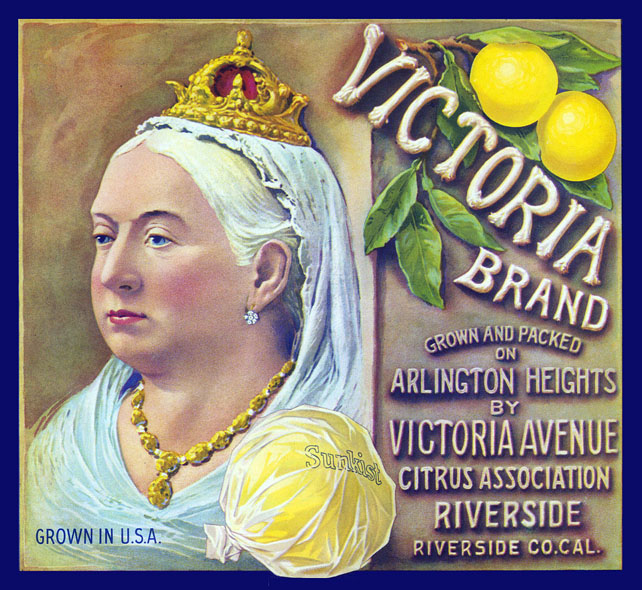 VictoriaBrandLemon(color)150